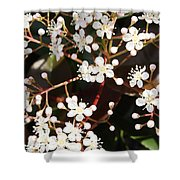 Spring Blossoms Macro Shower Curtain