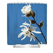 Spring Blue Sky Floral Art Print White Magnolia Tree Baslee Troutman Shower Curtain