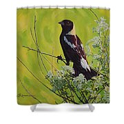 Spring Bobolink Shower Curtain