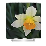 Spring Bow Shower Curtain