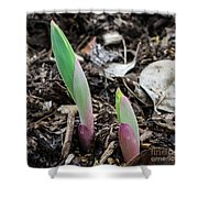 Spring Buds Shower Curtain