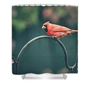 Spring Cardinal Shower Curtain