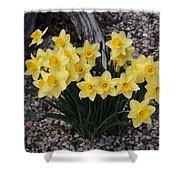 Spring Cheerleaders - Daffodils Shower Curtain