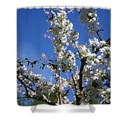Spring Cherry Blossoms Shower Curtain