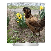Spring Chicken Shower Curtain