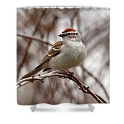 Spring Chipping Sparrow Shower Curtain