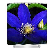 Spring Clematis Shower Curtain