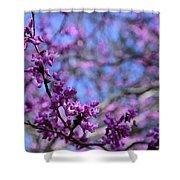 Spring Color Pop Shower Curtain