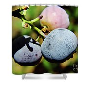 Spring - Colors - Blueberries Shower Curtain