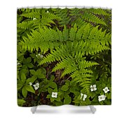 Spring Companions Shower Curtain
