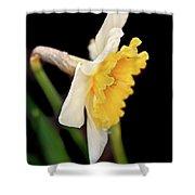 Spring Daffodil Flower Shower Curtain