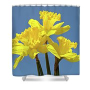 Spring Daffodil Flowers Art Prints Canvas Framed Baslee Troutman Shower Curtain