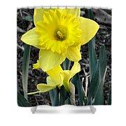 Spring Daffodil Shower Curtain