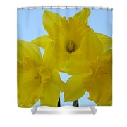 Spring Daffodils 2 Flowers Art Prints Gifts Blue Sky Shower Curtain