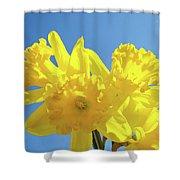 Spring Daffodils Flowers Garden Blue Sky Baslee Troutman Shower Curtain