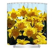 Spring Daffodils Shower Curtain
