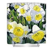 Spring- Daffodils Shower Curtain
