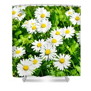Spring Daisy In The Meadow Shower Curtain