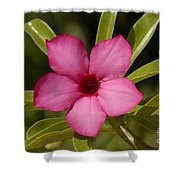 Spring  Shower Curtain