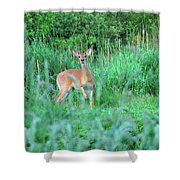 Spring Deer Shower Curtain