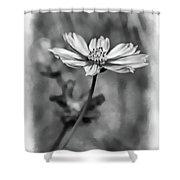 Spring Desires 2 Bw Shower Curtain