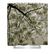 Spring Display Shower Curtain