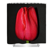 Spring Drop  Shower Curtain