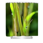 Spring Droplets Shower Curtain