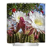 Spring Easter Cactus Blooms 789 Shower Curtain