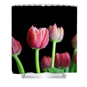 Spring Equinox Shower Curtain by Tracy Hall