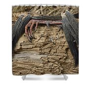 Spring Feathers Shower Curtain