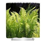 Spring Fern Fronds Shower Curtain