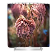Spring Flora Shower Curtain
