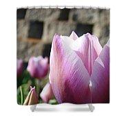 Spring Floral Tulip Flower Baslee Troutman Shower Curtain