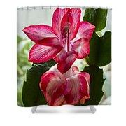 Spring Flower 7 Shower Curtain