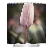 Spring Flower 6 Shower Curtain