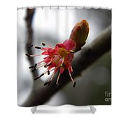 Spring Flower Closeup 2 Shower Curtain