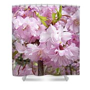 Spring Flowering Trees Art Prints Pink Flower Blossoms Baslee Shower Curtain