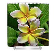 Spring Flowers 8 Shower Curtain