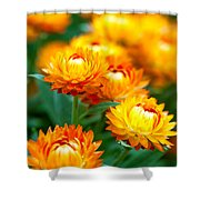 Spring Flowers In The Afternoon Shower Curtain