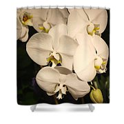 Spring Flowers No.13 Shower Curtain