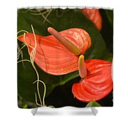 Spring Flowers No.8 Shower Curtain