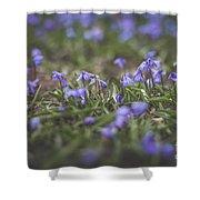 Spring Flowers - Scilla Shower Curtain by Viviana Nadowski