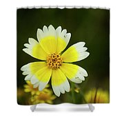 Spring Flowers Shell Road Shower Curtain