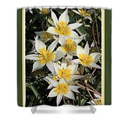 Spring Flowers With Green Border Shower Curtain