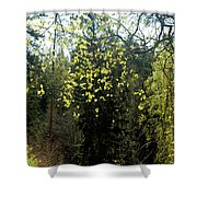 Spring Foliage Shower Curtain
