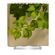 Spring Foliage Shower Curtain