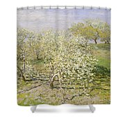 Spring. Fruit Trees In Bloom Shower Curtain