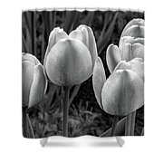 Spring Garden - Act One 2 Bw Shower Curtain