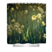 Spring Garden With Narcissus Flowers Shower Curtain